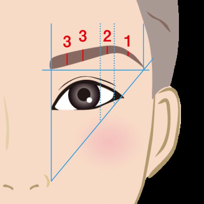 眉の太さの黄金比の図